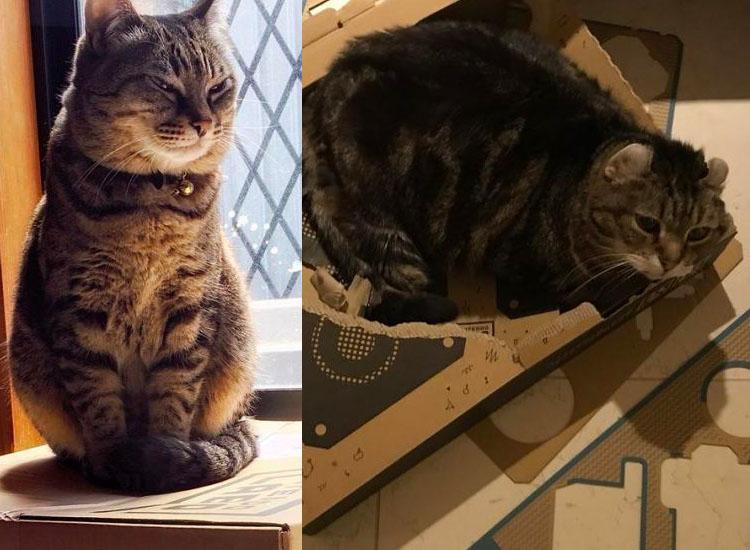 Nintendo Labo Cat